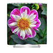 Closeup View Of A Dahlia That Was In The Cesky Krumlov Castle Gardens Shower Curtain
