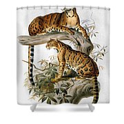 Clouded Leopard, 1883 Shower Curtain
