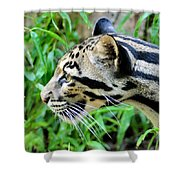 Clouded Leopard In The Grass Shower Curtain