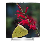 Cloudless Sulphur And Pineapple Sage Shower Curtain