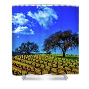Clouds Above Vinyards Shower Curtain