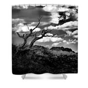 Clouds And A Tree Baw Shower Curtain