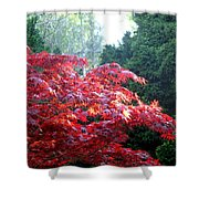 Clouds Of Leaves Shower Curtain