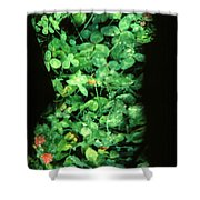 Clover Shower Curtain by Arla Patch