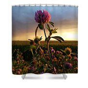 Clover At Sunset Shower Curtain by Viviana Nadowski