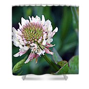 Clover Blossom Shower Curtain