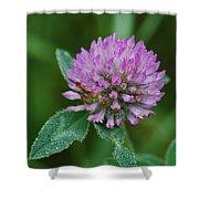Clover In Dew Shower Curtain