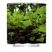 Clover In Montgomery Woods State Natural Reserve Shower Curtain