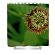 Clover Past Due Shower Curtain