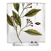 Cloves, 1735 Shower Curtain