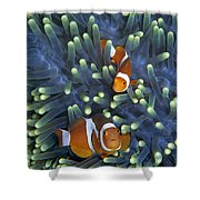 Clown Anemonefish Amphiprion Ocellaris Shower Curtain