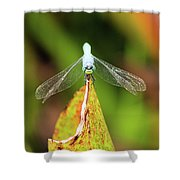 Clown Face Dragonfly Shower Curtain