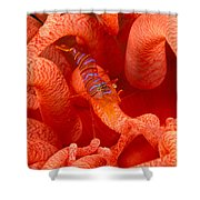 Clown Shrimp Shower Curtain