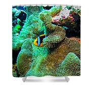 Clown2 With Anemone Shower Curtain