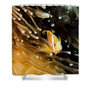 Clown3 With Anemone Shower Curtain