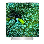 Clown4 With Anemone Shower Curtain