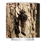 Club Tailed Robber Fly Shower Curtain