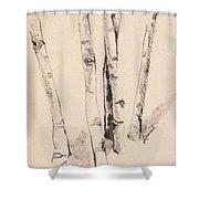 Clump Of Birch In Winter Shower Curtain