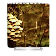 Cluster O Shrooms Shower Curtain
