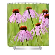 Cluster Of Cone Flowers Shower Curtain