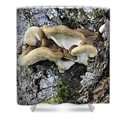 Cluster Of Fungi Shower Curtain