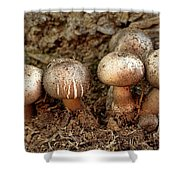 Cluster Of Mushrooms Shower Curtain