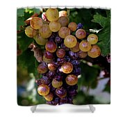 Cluster Of Ripe Grapes Shower Curtain