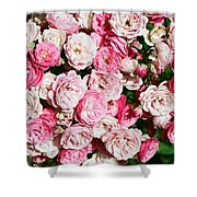 Cluster Of Roses  Shower Curtain