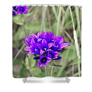 Clustered Bellflower Shower Curtain