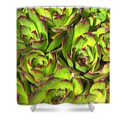 Clustered Succulents Shower Curtain