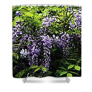 Clusters Of Wisteria Shower Curtain