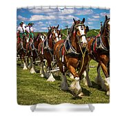 Budweiser Clydesdale Horses Shower Curtain by Robert L Jackson