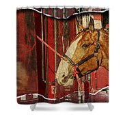 Clydesdale Ripped Shower Curtain