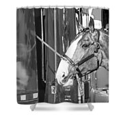 Clydesdale Shine Shower Curtain
