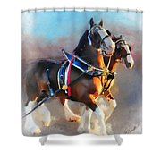 Clydesdales Shower Curtain