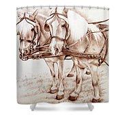 Coach Horses Shower Curtain