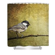Coal Tit Periparus Ater Shower Curtain