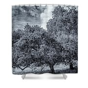 Coast Live Oak Monochrome Shower Curtain