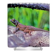 Coast Range Fence Lizard Shower Curtain