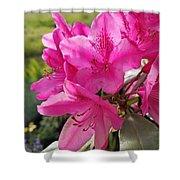 Coast Rhododendran- Washington State Flower Shower Curtain