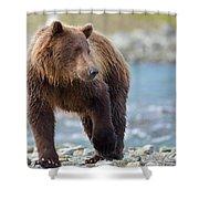 Coastal Brown Bear Shower Curtain