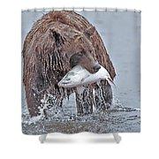 Coastal Brown Bear With Salmon  Shower Curtain
