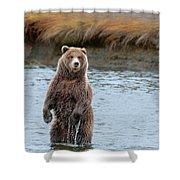 Coastal Brown Bears On Salmon Watch Shower Curtain