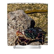 Coastal Crab Shower Curtain