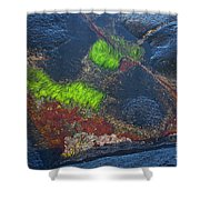Coastal Floor At Low Tide Shower Curtain