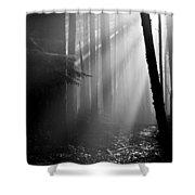Coastal Forest 2 Shower Curtain
