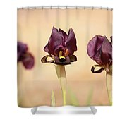 Coastal Iris  Shower Curtain