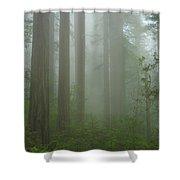 Coastal Mist Shower Curtain