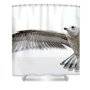 Coasting Shower Curtain