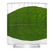 Coca Leaf, Erythroxylon Coca Shower Curtain